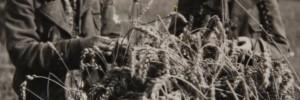 Living through World War II