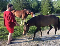 Charles Graham Clifton with horses in 2015 - photo provided by Joshua Franke-Hyland