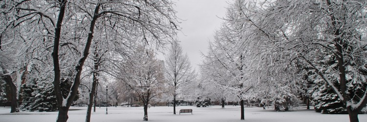A winter 2017 scene in Grand Forks - photograph by C.S. Hagen