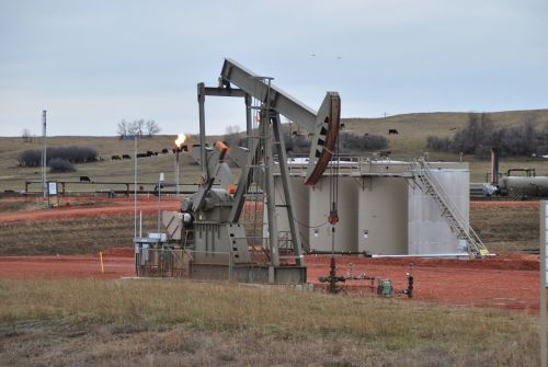 In the Bakken, cattle and oil live side by side - photograph by C.S. Hagen