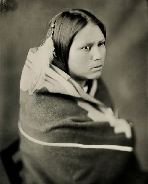 Kaydence V. Little Owl - wet plate by Shane Balkowitsch