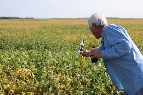 Donald Heitkamp shows a persticide flag depicting dicamba use in the field that was poisoned in 2010 - photograph by C.S. Hagen