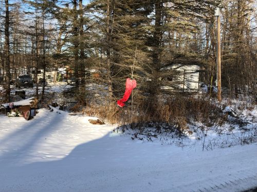Red dress hanging near  White Earth State Forest to raise awareness for mmiw issues. this was the insperation for this weeks cover.- photograph provided by Lissa Yellowbird-Chase