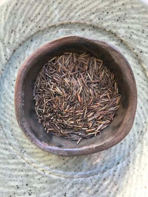 Hard harvested wild rice - photograph by Dana Thompson