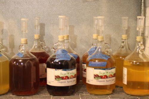 Experimental apple cider flavors - photograph by C.S. Hagen