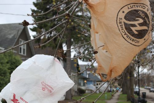 Plastic bags hanging from Fargo trees - photograph by C.S. Hagen
