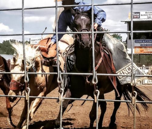 Miles City Bucking Horse Sale 2016 - photograph by Sabrina Hornung