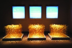 Michael Conlan, Bounty, 2013, Backlit photograph, wheat, wood, and gold leaf, 144 x 96 x 96 in. Courtesy of the artist.
