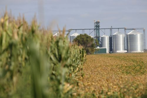 Corn next to soybeans in North Dakota with silos waiting - photograph by C.S. Hagen