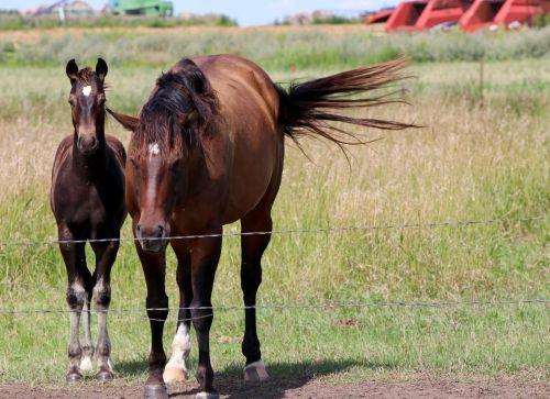 Napoleon horses - photograph by C.S. Hagen