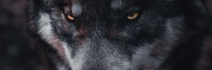 """Boys (and Girls) Who Cried """"HOAX!"""" Meet the Covid-19 Wolf"""