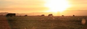 Earth Day Entertainment: Fargo Theatre screens 'Cowspiracy'