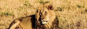 Lion hunter from ND sparks outrage